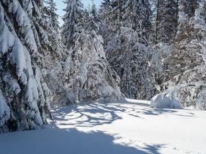 Der weisse Schwarzwald