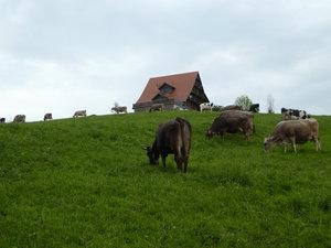 Behäbige Bauernhöfe in der March