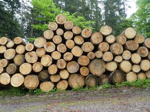 Sauber geschichtetes Holz wartet auf den Abtransport